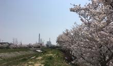 *4/4 植田町の桜*