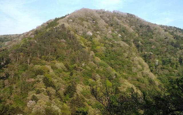 遠野町 往生山の新緑